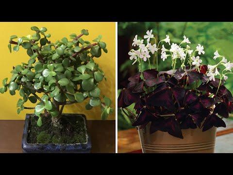 5 roślin, które
