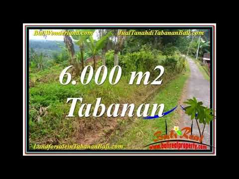 FOR SALE Affordable PROPERTY 6,000 m2 LAND IN Tabanan Selemadeg BALI TJTB349
