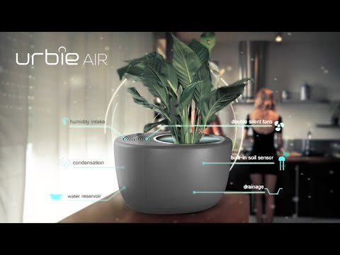 Deal: The Urbia Air Is a Humidifier, Air Filter and Self-Watering Plant
