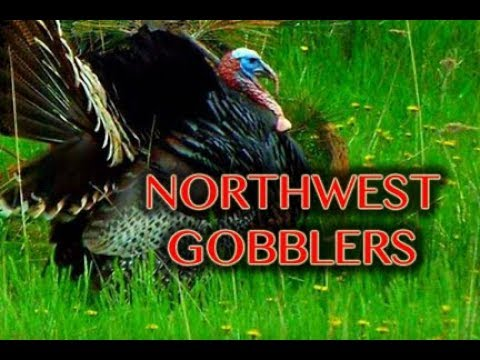 NORTHWEST GOBBLERS!!! Glen Berry Hunts Turkey in Washington State