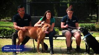 Animal Welfare League Speed Dating - Purrfect Match