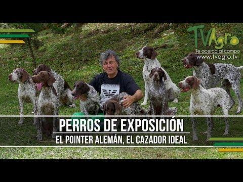 El Pointer Aleman, el Cazador Ideal - Perros de Exposicion - TvAgro por Juan Gonzalo Angel