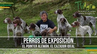 El Pointer Aleman, el Cazador Ideal  Perros de Exposicion  TvAgro por Juan Gonzalo Angel