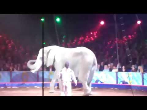 Elephant show world sircus amazing
