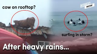Rescue operation of cows stranded on rooftops by floods in S. Korea