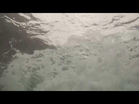 Trinidad and Tobago Marine Wild Life Sun.Salt.Sea.Videography