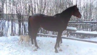 Прикольно. Лошади  и другие животные.