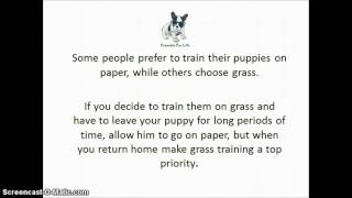How To Do Basic French Bulldog Potty Training