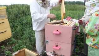 Пчеловодство. Сергей Толстов советы для начинающих пчеловодов. Отборка рамок для качки.