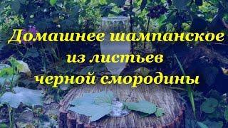 Домашнее шампанское, из листьев черной смородины(Рецепты домашнего алкоголя проверенные на собственном организме Подписывайтесь http://www.youtube.com/user/alkofan1984?sub_con..., 2014-08-05T23:17:12.000Z)