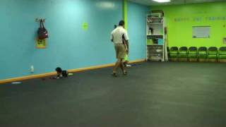 Happy Dog Training Family Dog 2