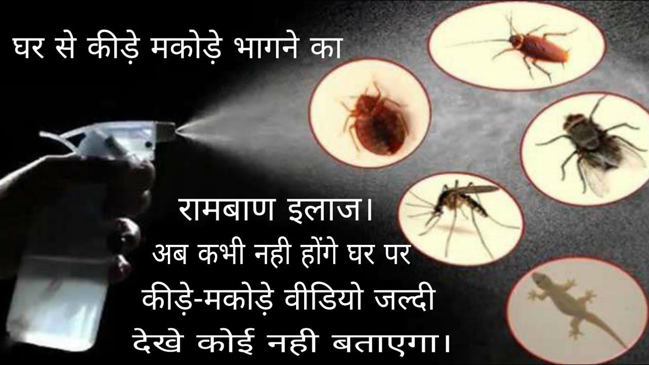 कीड़े-मकोड़ों को भगाने के लिए पढ़ें ये 5 घरेलू नुस्खे