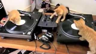 DJ Cats   Кошачий хаос   VideoKokteili