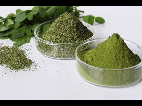Moringa Powder: Why I Take Moringa Oleifera & The Health Benefits of Moringa