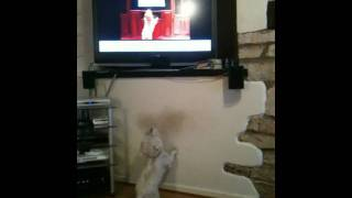 Dog Goes Crazy Whilst Watching Dog Goes Crazy Watching Animal Planet