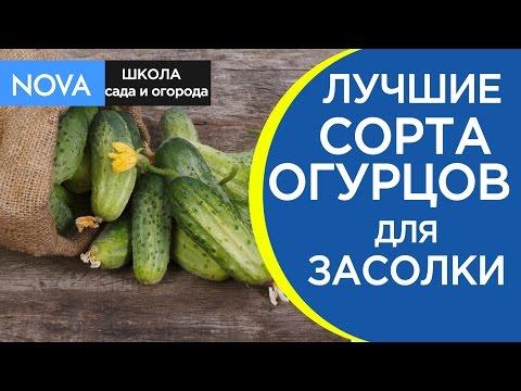 Засолочные сорта огурцов. Как выбрать высокоурожайные сорта огурцов для засолки?NOVA