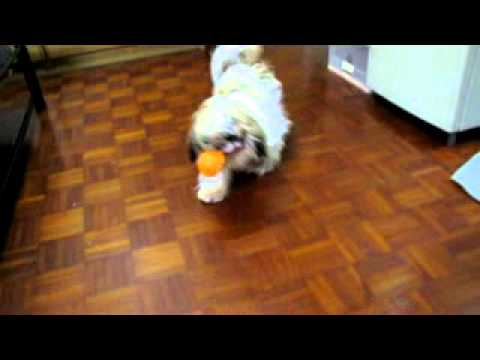 Bad And funny Dog…Most  Stupid Dog in the WORLD!!!