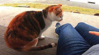 猫の集会所でベンチに座っていたら三毛猫が恐る恐る膝の上に乗ってきた