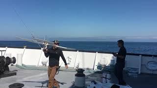 Coastal Trident 2019 Trailer