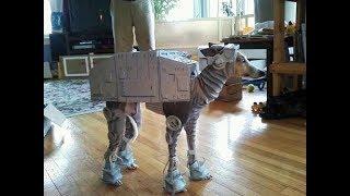 Смешные и прикольные костюмы для животных на Хэллоуин
