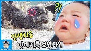 국민이가 인생 처음 강아지를 보았을때!? 표정 너무 웃긴거 아님 (꿀잼ㅋ) ♡ 국민 일상 밀착중계 육아 일기 놀이 Vlog | 말이야와친구들 MariAndFriends
