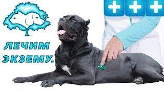 Лечим экзему у собаки Кане Корсо. Присыпка. Спрей. Мазь. #canecorso #dogs #собаки