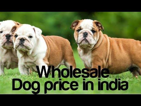 Dog price in India | Top 10 popular dog breeds in India with price