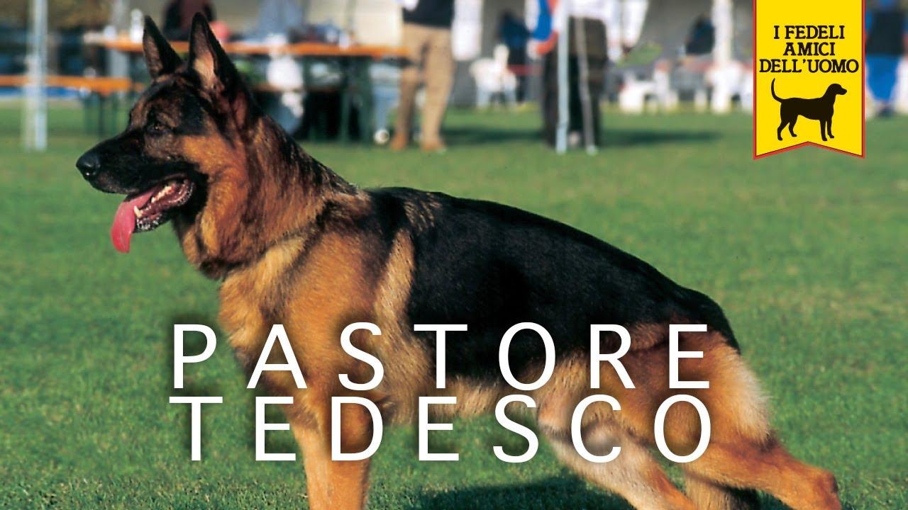 Pastore Tedesco Trailer Documentario Youtube