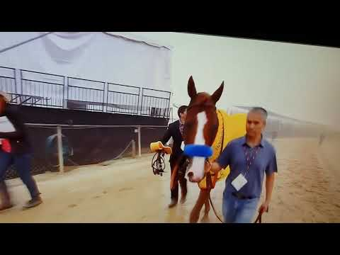 Justified after winning Preakness 2018