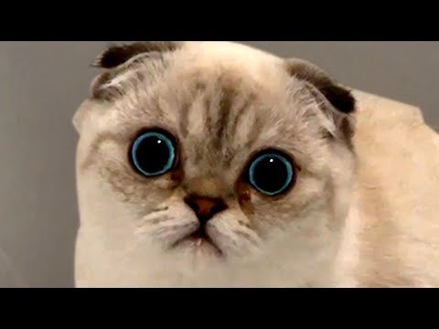 Silly Cute Cats | Funny Pet Videos