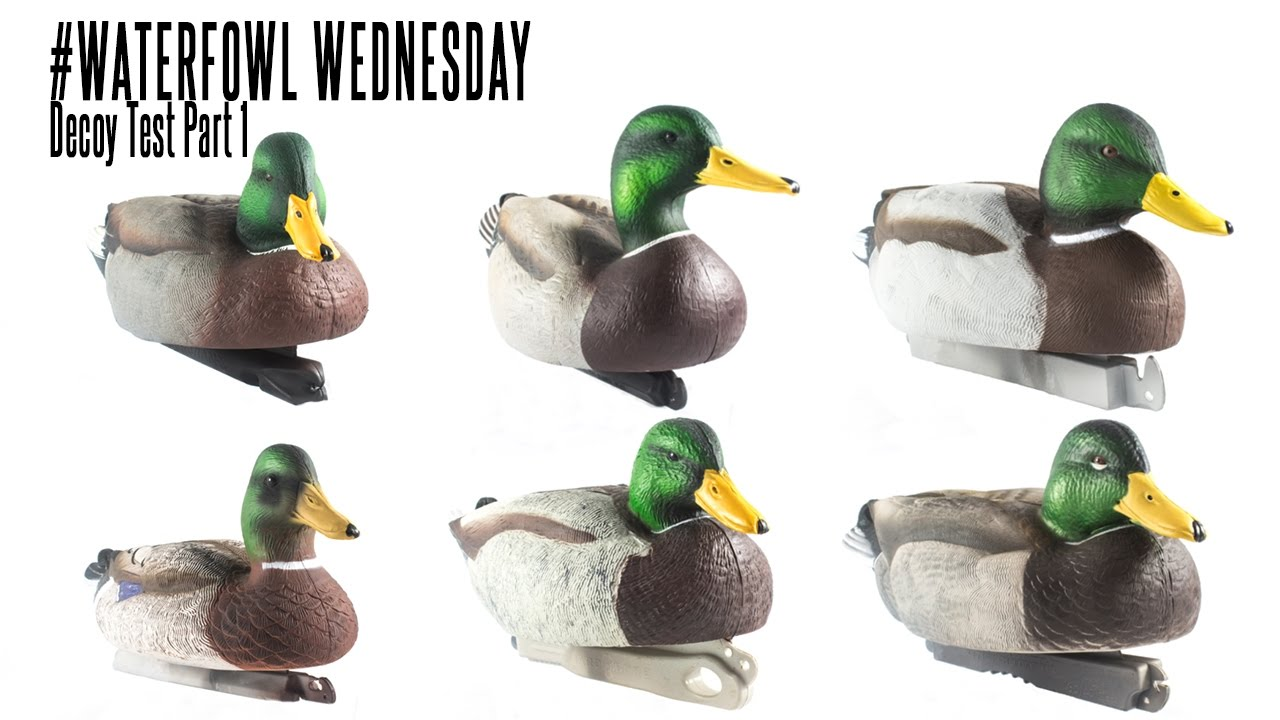 af630b14 Floating Duck Decoy Test Part 1: Waterfowl Wednesday - YouTube