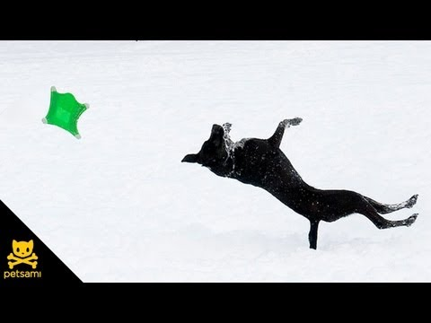 Watch this dog do a backflip