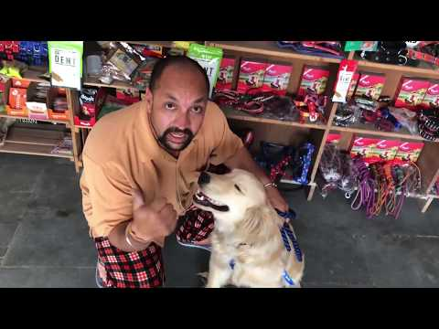 Pet Care - How to Wear Harness For Dog - Bhola Shola