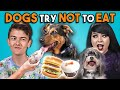 Dogs Try Not To Eat Challenge (React)