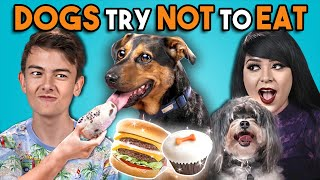 Download Dogs Try Not To Eat Challenge (React) Mp3 and Videos