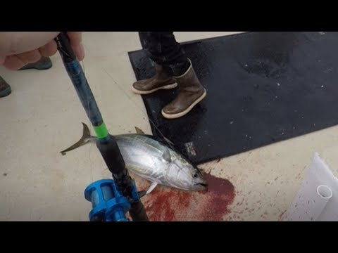 SAN DIEGO - YELLOWFIN TUNA & YELLOWTAIL OFFSHORE FISHING - 2019 Pacific Voyager   YouTube Edit