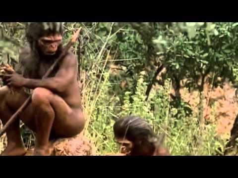 Ver Evolucion de la Especie Humana – Docufilm en Español