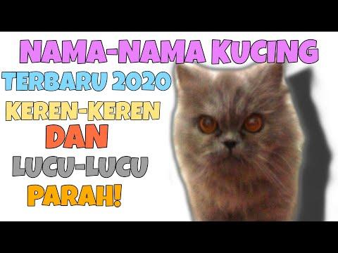 Nama Kucing Free Fire Keren 81021 Nama Untuk Kucing Comel Lucu Dan Unik