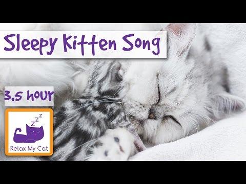 Sleepy Kitten Song! Calm Down Your Hyper Kitten with Relaxing Sleep Music for Kittens! Over 3 Hours!