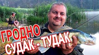 БЛУДНЫЙ КОТ Судак на Юбилейном озере в Гродно рыбалка с друзьями