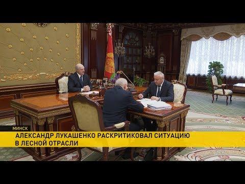Лукашенко о работе лесной отрасли: Отвратительное отношение