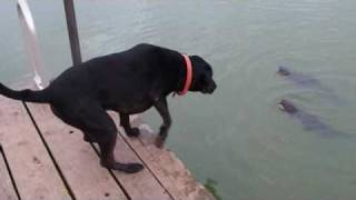 Catfishing doggie style http://facebook.com/everythingdogs thumbnail