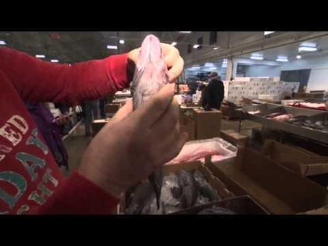 Inside Frantic Life Of NYC's Fulton Fish Market