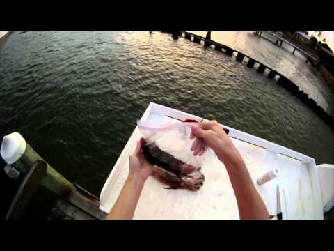 How to Swordfish - Tutorial/Guide