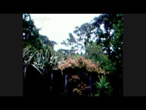 zen room 15 march 2015 storm live view cyclone pam
