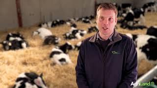 Teagasc's Alan Dillon: Calf prices