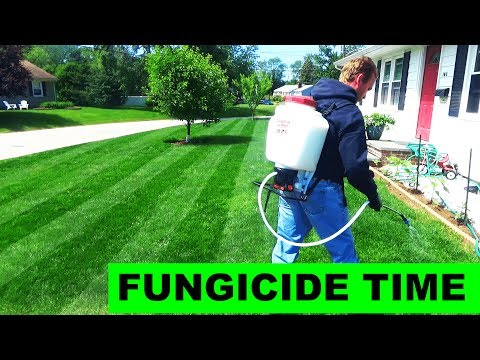 Putting down chemical lawn fungicide - YouTube