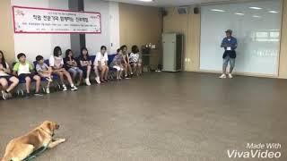Gps애견학교 반려견지도사,애견훈련사 직업체험 수업