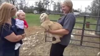 Koza i dziecko