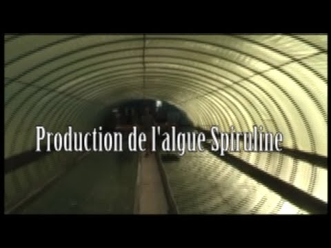 Production de l'algue spiruline